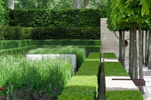 Laurent-Perrier Garden, RHS Chelsea Flower Show 2009.Planting includes Box (Buxus sempervirens), Hornbeam (Carpinus betulus), and Yew (Taxus baccata).