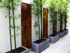 Indoor-Plant-Design-Ideas-Bamboo-Tree-Mini-.Easiest-Plants-To-Maintain