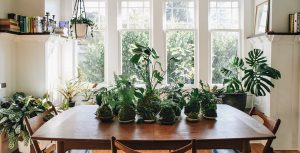 Pistils-Interior-Design-Kokedama-Table